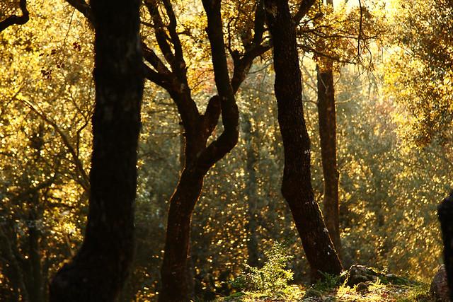 El bosque al atardecer