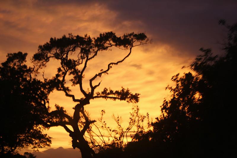 Sunset - Yala National Park