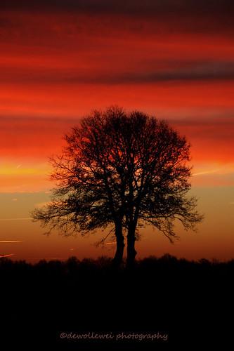 tree sunrise overijssel hardenberg zonsopkomst sibculo vechtdal overijsselsvechtdal vechtdaloverijssel