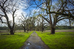 Path through the trees - taken at Sycamore Grove in Livermore