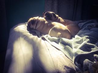 Snuggle in the Sun 2