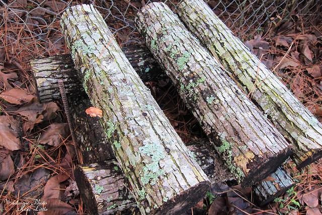 mushroomlog2