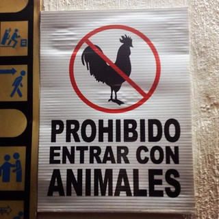No chickens please. La Joya hotel, Aguascalientes
