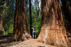 Sequoia - Yosemite