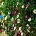Ooty flowers