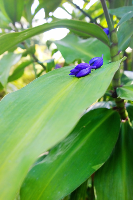 Costa Rica Flowers & Plants