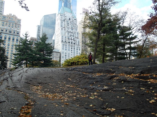Central Park on Veteran's Day, Autumn 2014