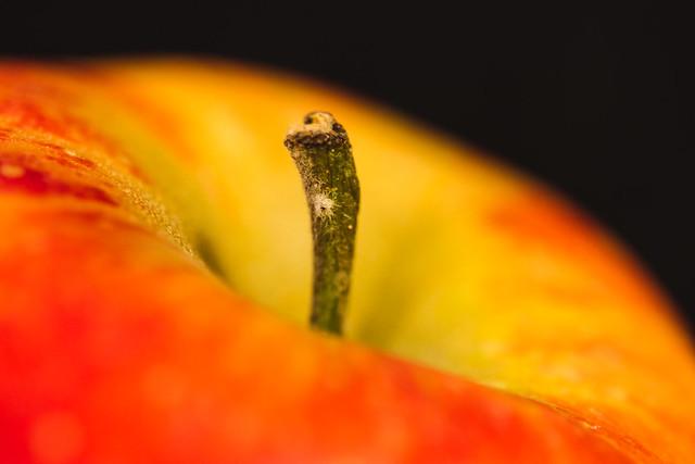 [246] Apple