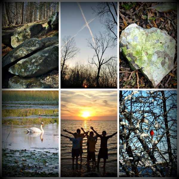 A collage of nature scenes