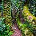 Parque Nacional Fray Jorge II