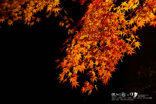 播州清水寺 DSC04618 (1)