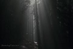 Raining Sunlight