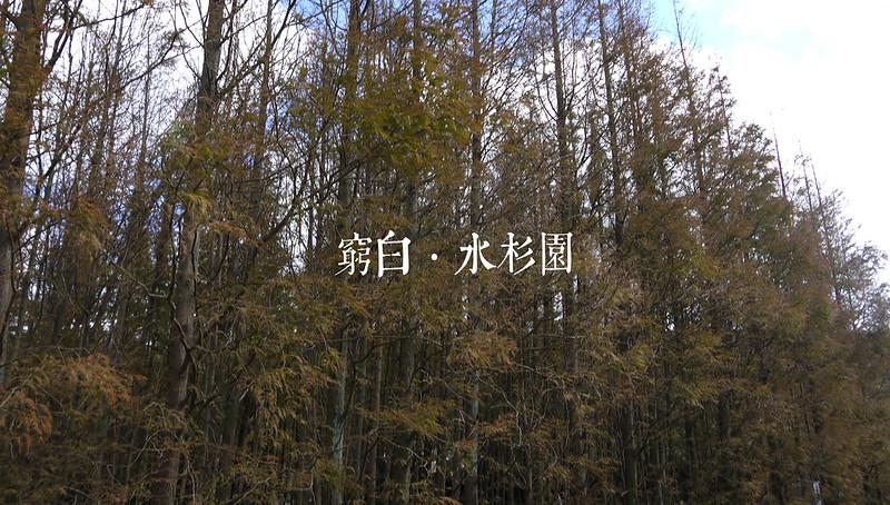 水杉園 01
