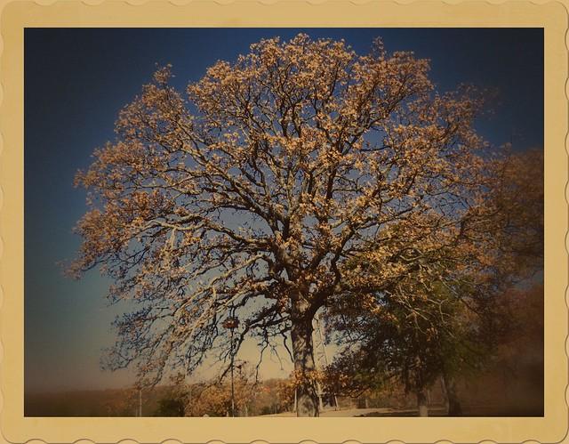 Woolaroc Sky Tree - Paint Shop