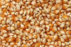 popcorn IMG_0924