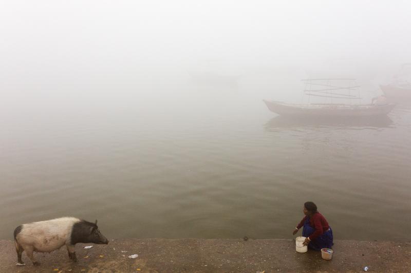 Pig, Allahabad