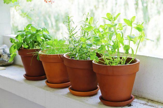 -plantas
