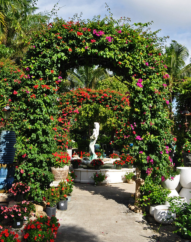 Bougainvillea Arches (2)