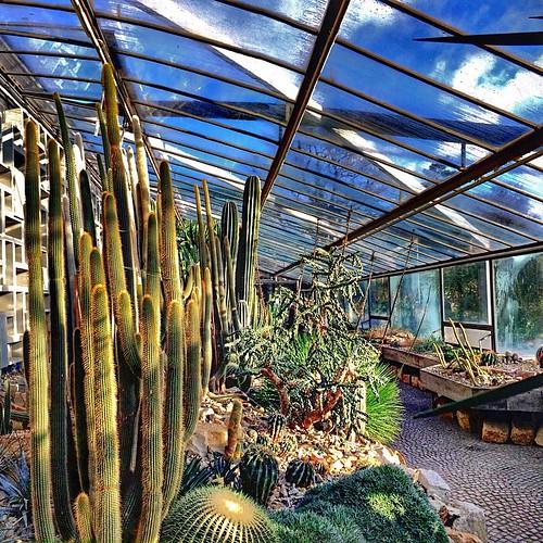 Planten un Blomen, Hamburg, Germany  The Alter Botanischer Garten Hamburg, sometimes also known as the Schaugewächshaus or the Tropengewächshäuser, is a botanical garden now located primarily within greenhouses in the Planten un Blomen park at Stephanspla