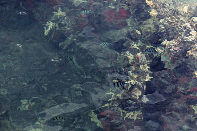 Coral Reef at USS Arizona