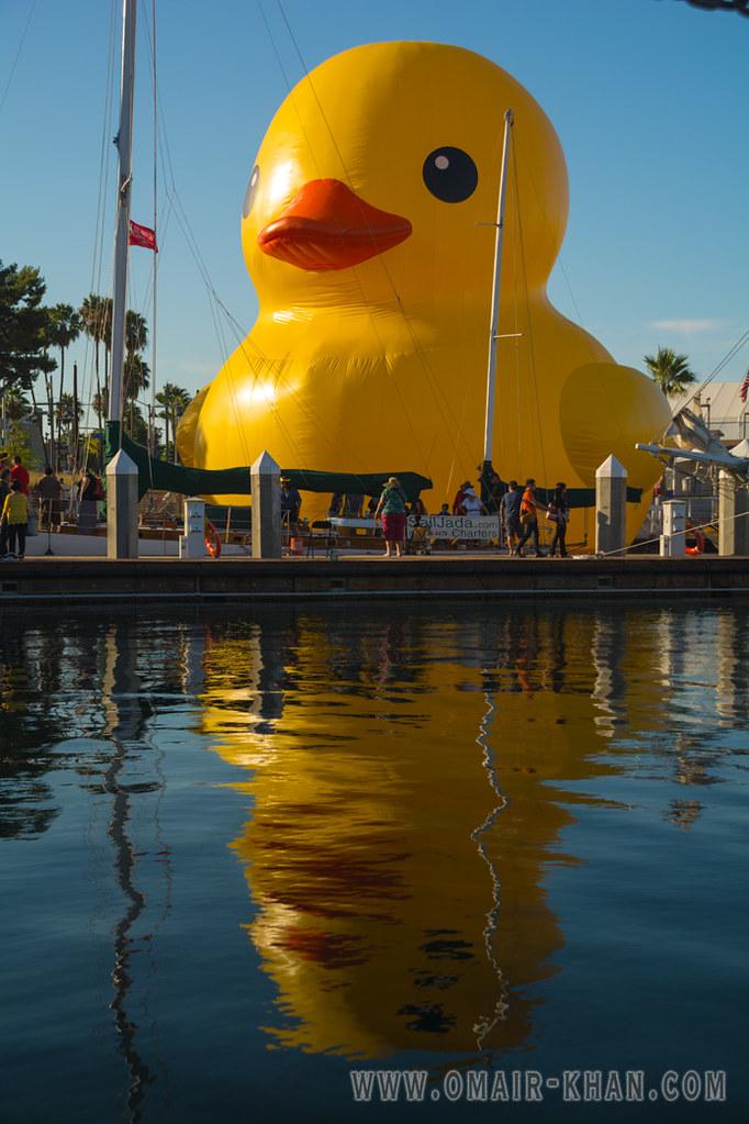 Giant Rubber Duck   Omair Khan