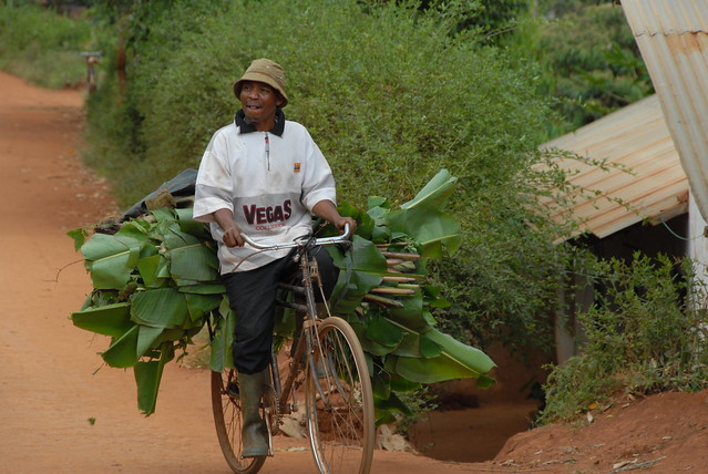 Transporting fodder on a bicycle, Ubiri village, Lushoto