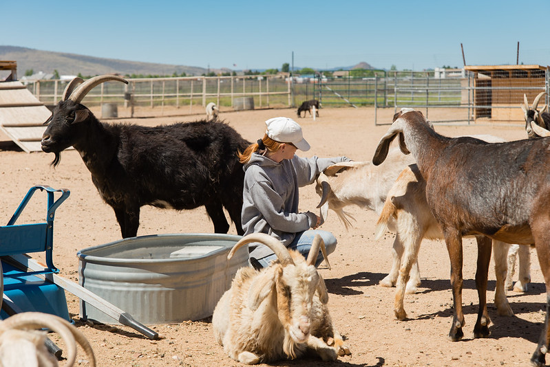 Volunteer with Goat