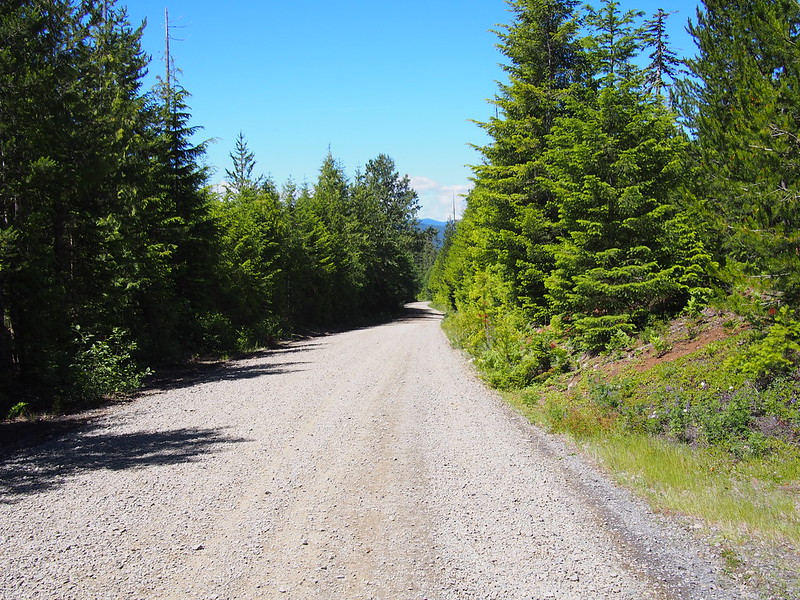 Carson Guler Road: Not quite as steep as the pavement, but slower because of the gravel.