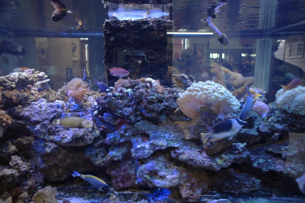 七星潭柴魚博物館 (12)