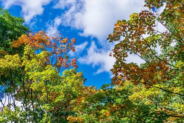 A bit of fall foliage