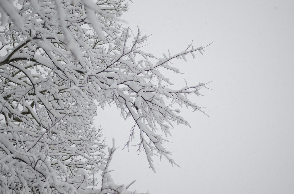 the first snow 18
