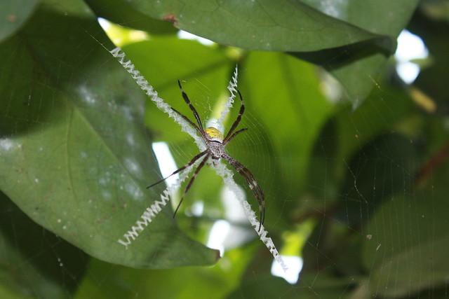 X Spider 5