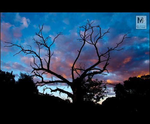 paisajes naturaleza nubes puestadesol castaño anochecer laaliseda