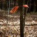 Two Leaves/Hillsborough