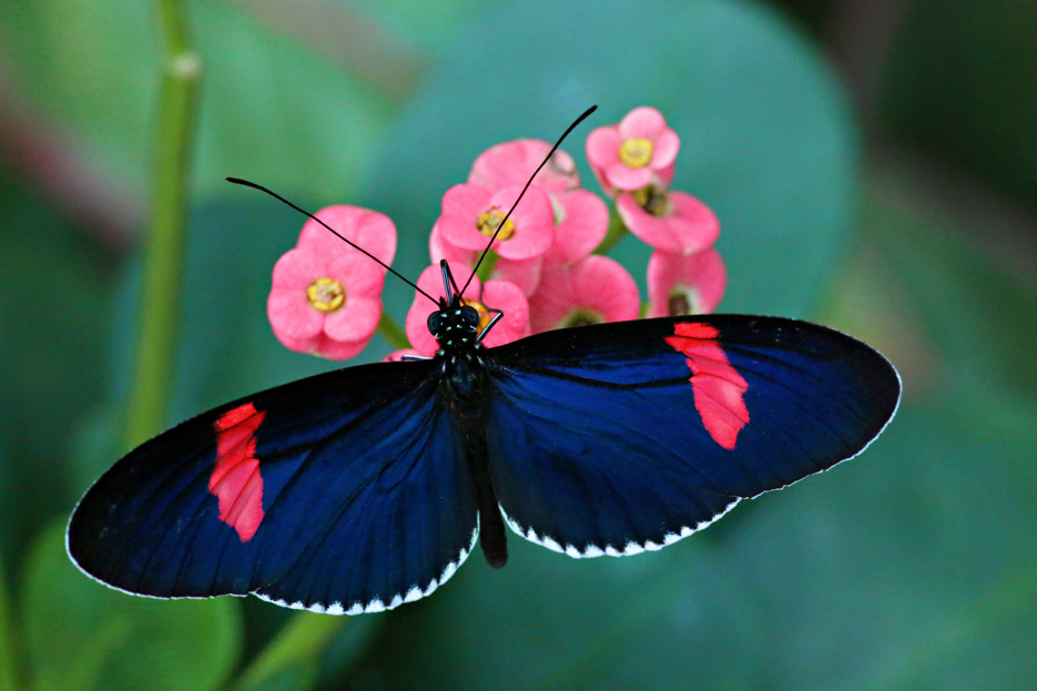 091014_01_butterfly10