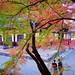 Nanzen-ji Autumn