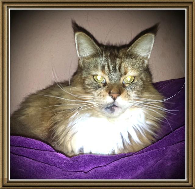 Luna auf lila Decke