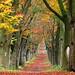 Autumnal avenue by RainerSchuetz