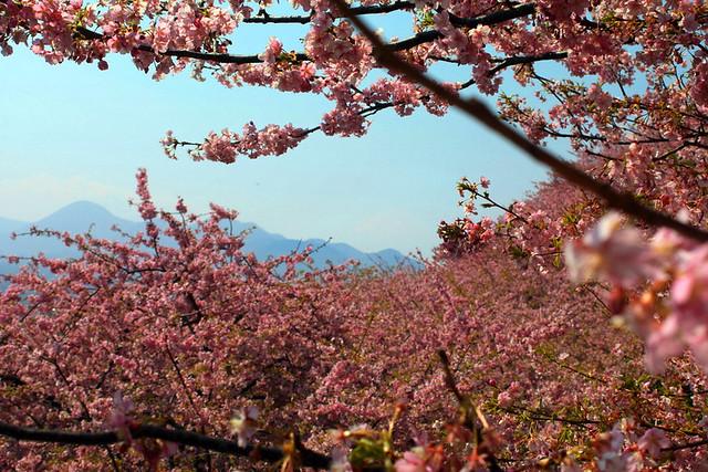 2014-03-16_00116_高松山