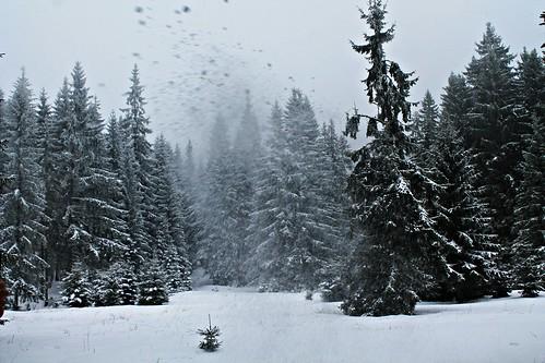 winter nature beautiful beauty season landscape fantastic europe moments magic best romania wonderland flikr amateurs tistheseason outstandingromanianphotographers