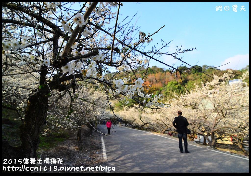 2015信義土場梅花DSC_9309