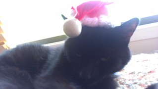 Dim Sim is Santa Claws