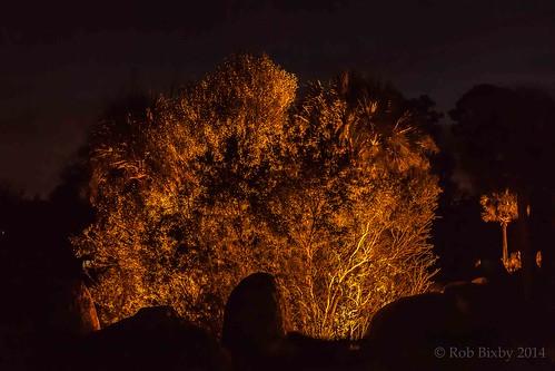 christmas family holiday zoo lights grandchildren grandkids zoolights