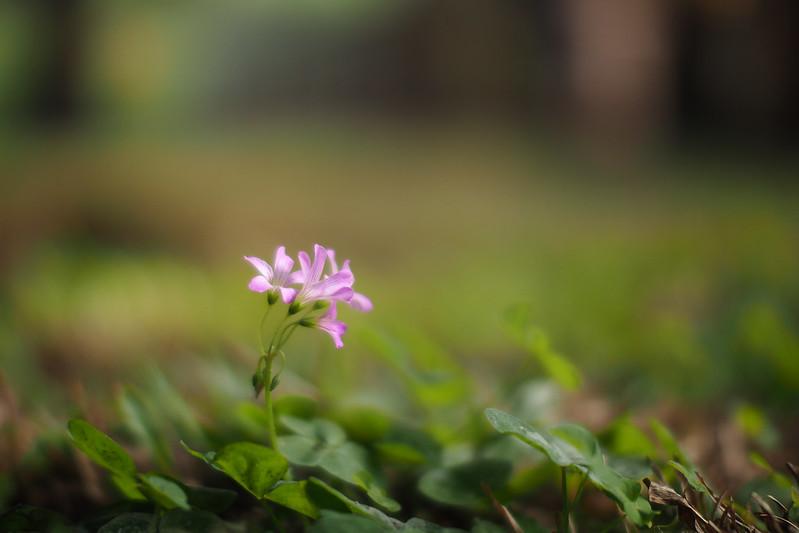 f/0.95 42.5mm|Chiayi Park
