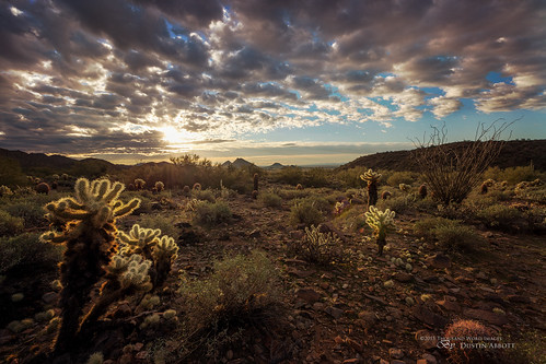 travel winter arizona cactus usa canada texture beautiful clouds sunrise dawn unitedstates desert atmosphere handheld scottsdale fullframe hdr 2014 carlzeiss lostdogtrailhead canoneos6d jessicadrossin thousandwordimages distagon1528ze dustinabbott dustinabbottnet adobelightroom5 adobephotoshopcc alienskinexposure7 zeissdistagont2815mmze