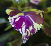 Botanic Gardnes-085