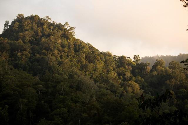 Bukit Tapan, Kerinci, Sumatra, Indonesia
