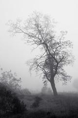 Tree in April Fog