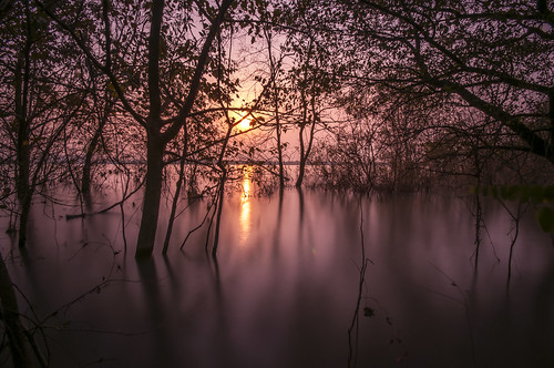 china longexposure sunset lake tree landscape twilight reservoir dongpu wetland hefei ilobsterit