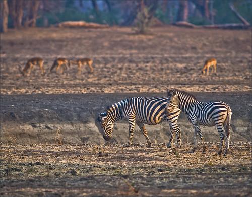 africa dusk zimbabwe manapools